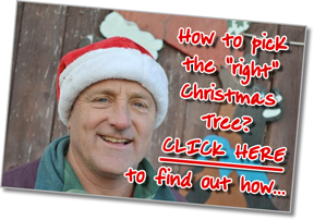 "Photo of Fallowfield Christmas Tree Farm owner, Kenyy Stuyt, whcih links to a short article on ""How to choose the 'right' Christmas Tree"""