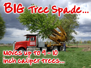 Our BIG, new tree spade lets us move your really BIG trees - Fallowfield Tree Farm