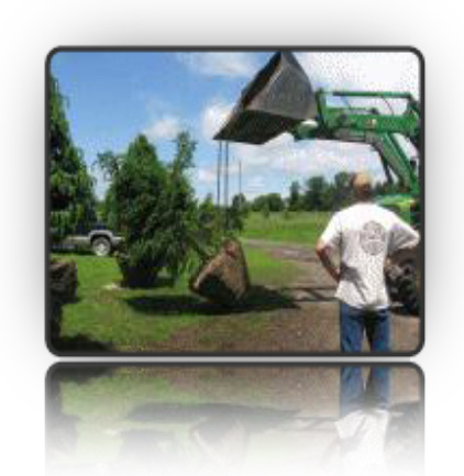 Hoisting a mature coniferous tree with rootball to plant it, using our tree scoop/bucket tractor - Fallowfield Tree Farm - 613-720-3451