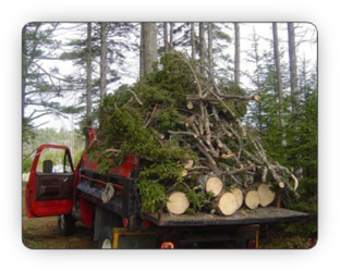 removing a coniferous tree damaged in a storm - Fallowfield Tree Farm, Ottawa - tree removal services - 613-720-3351