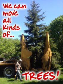 "Picture of our large tree spade with a caption that reads - ""We can move all kinds of TREES!"""
