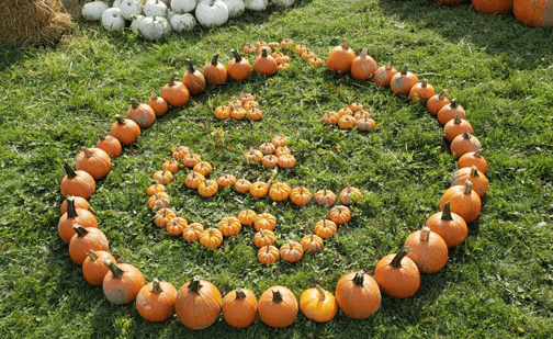 A photo of a 'happy face' made with pumpkins fo various sizes by the team at Fallowfield Tree Farm