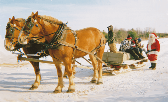 Photo of two, hearty Fallowfield Tree Farm draw horses, getting ready to take a family AND Santa on an exciting winter sleigh ride