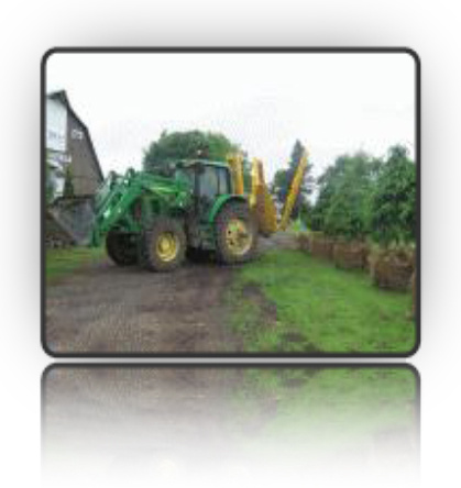 Organizing mature coniferous trees for delivery and planting using our tree scoop/bucket tractor - Fallowfield Tree Farm - 613-720-3451