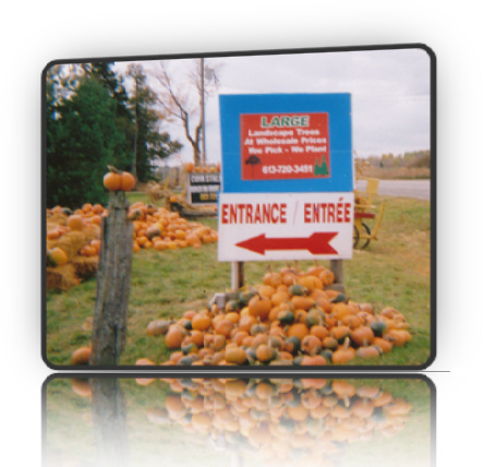 Fallowfield Tree Farm - In the Fall, we always have tons and tons of pumpkins of all sizes - Fallowfield Tree Farm 613.720.3451